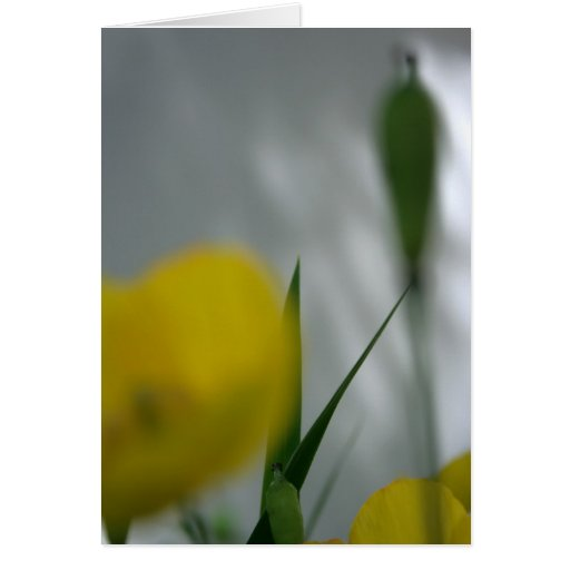 Amapolas y sombra (4) tarjeta