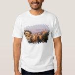 Amarante, Portugal T Shirt