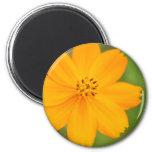 Amarela de Diversos Flor Imán Para Frigorífico