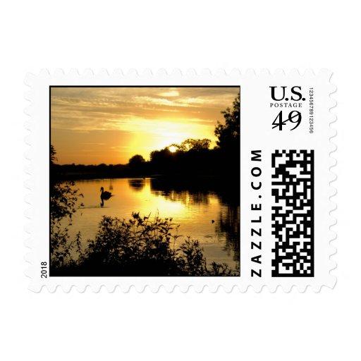 Amarillo anaranjado del lago swan de la puesta del sellos