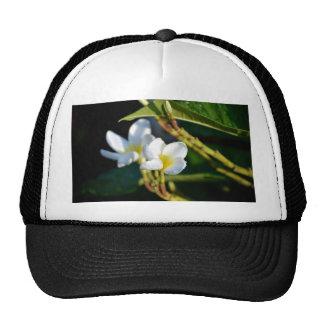 amarillo blanco de la flor de los leus gorras