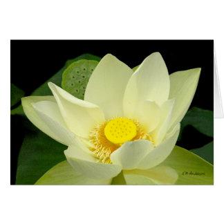 Amarillo claro flotando waterlily el primer Ca de Tarjeta De Felicitación