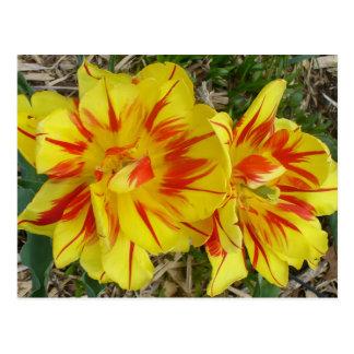 Amarillo con la flor rayada roja tarjetas postales