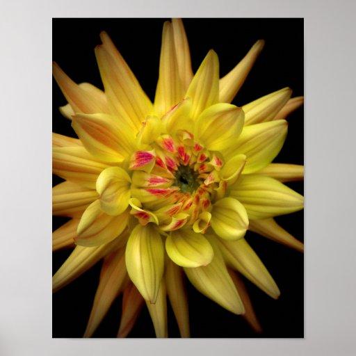 Amarillo de la corona de la dalia póster