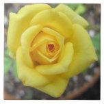 Amarillo de la flor de la rosaleda mini azulejos cerámicos