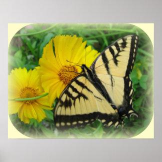 Amarillo de la mariposa póster