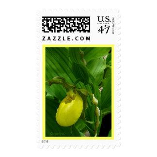 Amarillo de Ladyslipper Timbre Postal