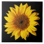 Amarillo del girasol en el negro - flores modifica azulejo ceramica