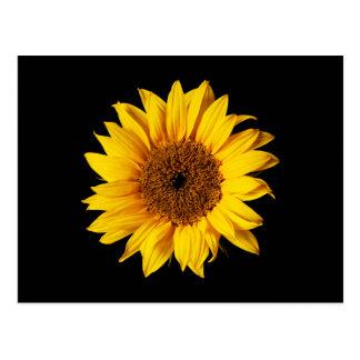 Amarillo del girasol en el negro - flores modifica postales