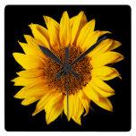 Amarillo del girasol en el negro - flores modifica relojes