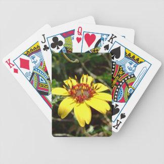 Amarillo del lyrata de Berlandiera de la flor del  Baraja Cartas De Poker