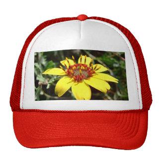 Amarillo del lyrata de Berlandiera de la flor del  Gorros