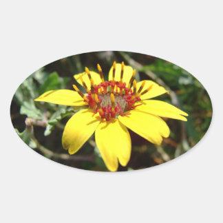Amarillo del lyrata de Berlandiera de la flor del Pegatina Ovalada