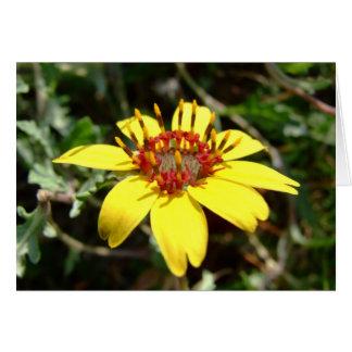 Amarillo del lyrata de Berlandiera de la flor del Tarjeta De Felicitación