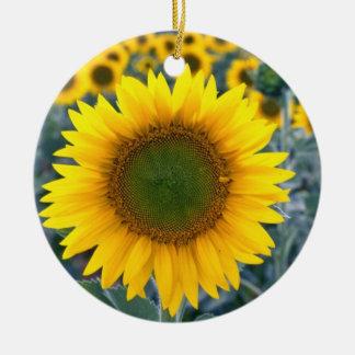 amarillo destaqúese de las flores de la muchedumbr ornatos