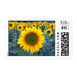 amarillo destaqúese de las flores de la muchedumbr sellos