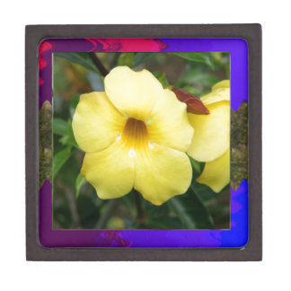 Amarillo elegante barato de la flor de la ORQUÍDEA Cajas De Regalo De Calidad