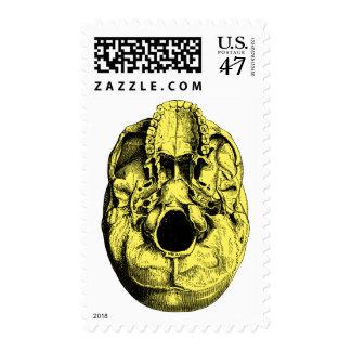 (Amarillo humano anatómico de la base del cráneo Sellos