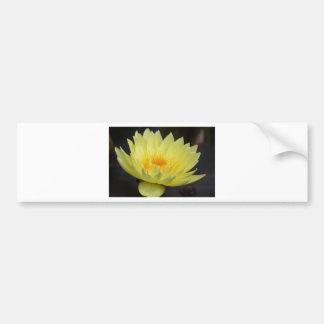 Amarillo Lotus Car Bumper Sticker