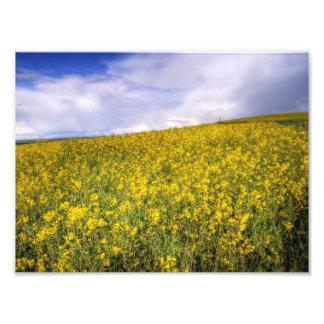 Amarillo Impresiones Fotograficas