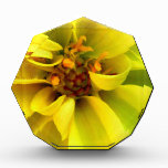 Amarillo soleado de la flor