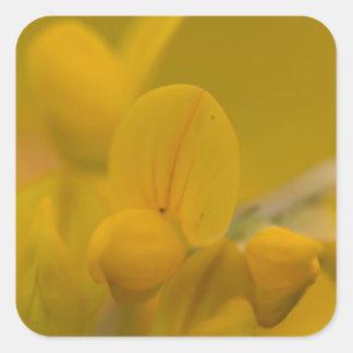 Amarillo suave pegatina cuadrada