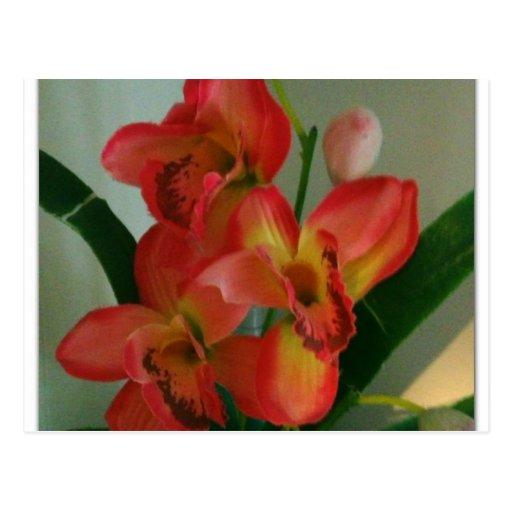 amarillo y centro de flores rosado anaranjado postales