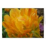 Amarillo y pétalos dobles anaranjados del tulipán tarjeta pequeña