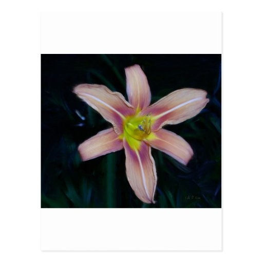 amarylis postcards