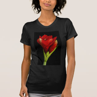 Amaryllis 12-23-2010 T-Shirt