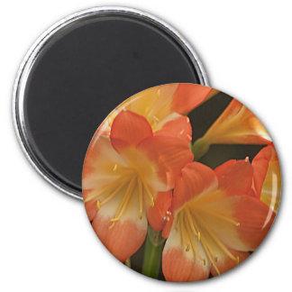Amaryllis 2 imán redondo 5 cm
