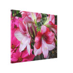 Amaryllis and Poinsettia Red Holiday Flowers Canvas Print