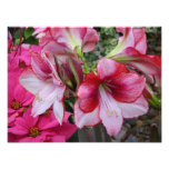 Amaryllis and Poinsettia Red Holiday Flowers Photo Print