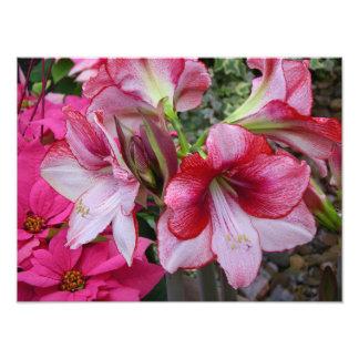 Amaryllis and Poinsettias Holiday Photo Print