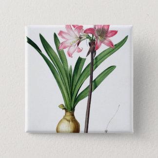 Amaryllis Belladonna, from 'Les Liliacees', engrav Pinback Button