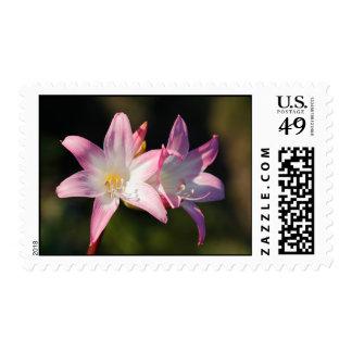 Amaryllis belladonna postage