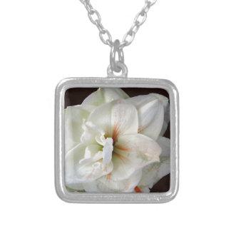 Amaryllis blanco colgante cuadrado