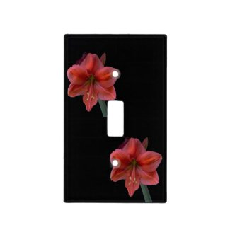 Amaryllis Blooms on Black Light Switch Cover