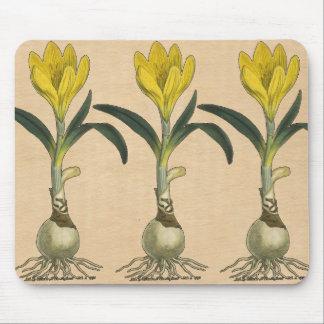 Amaryllis Botanical Art Vintage Drawing Mouse Pad