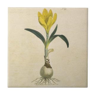 Amaryllis Botanical Vintage Garden Print Ceramic Tile