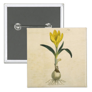 Amaryllis Botanical Vintage Garden Print Pinback Button