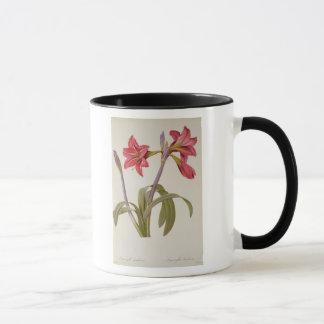 Amaryllis Brasiliensis Mug