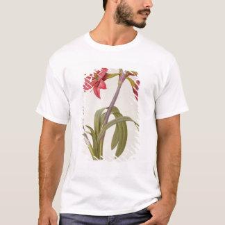 Amaryllis Brasiliensis T-Shirt