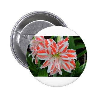 Amaryllis Button