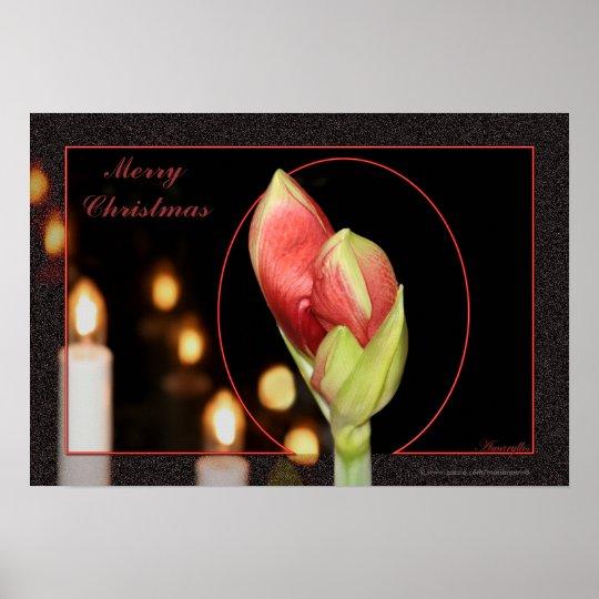 Amaryllis Christmas Poster