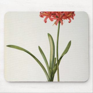 Amaryllis Curvifolia, 1809, from `Les Mouse Pad
