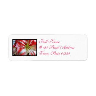 Amaryllis del bastón de caramelo etiqueta de remite
