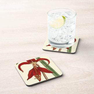 Amaryllis Floral Coaster Set