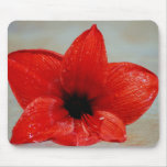 Amaryllis flower and its meaning mouse pad