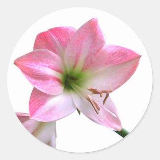 Amaryllis Flower Classic Round Sticker